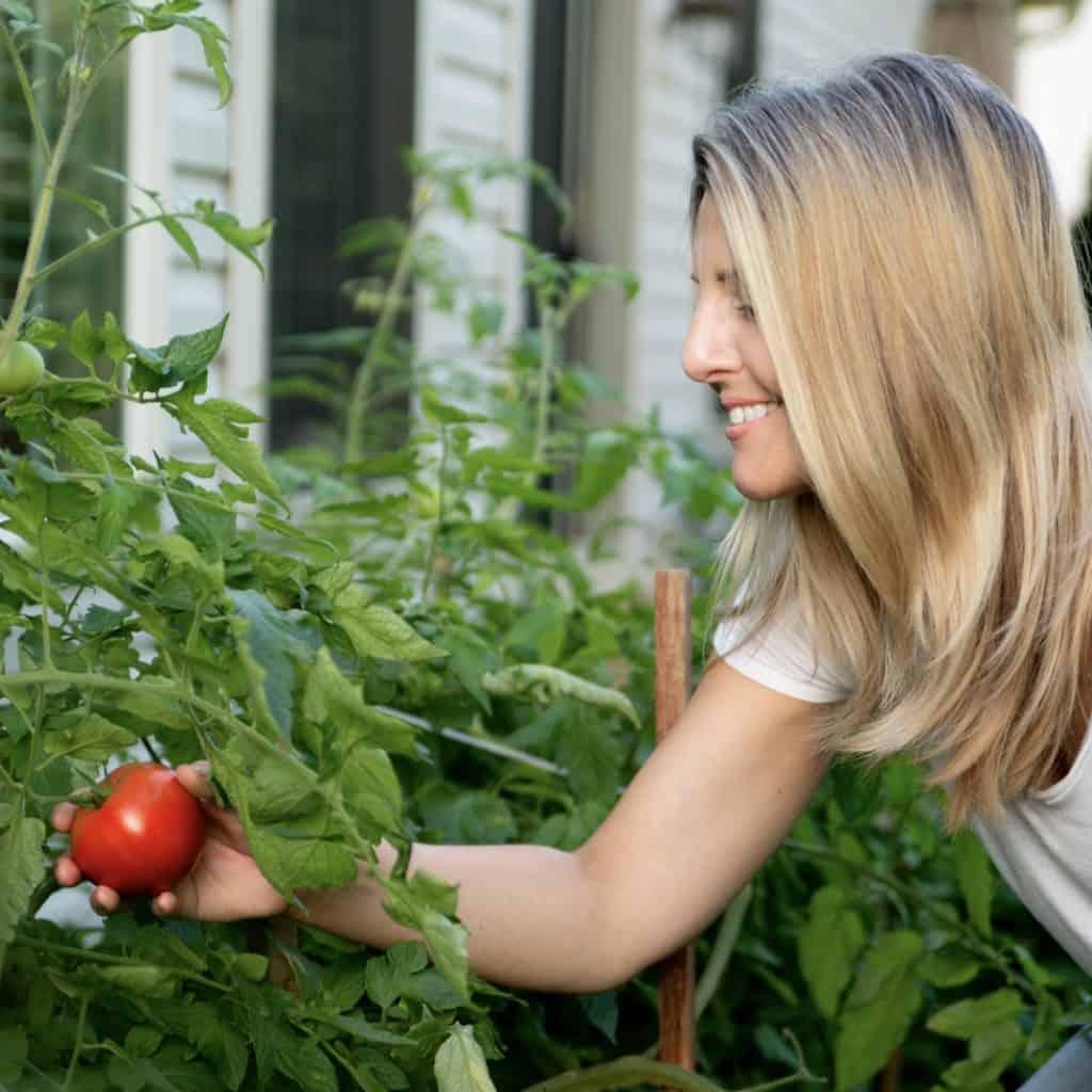 erin picking tomatoes