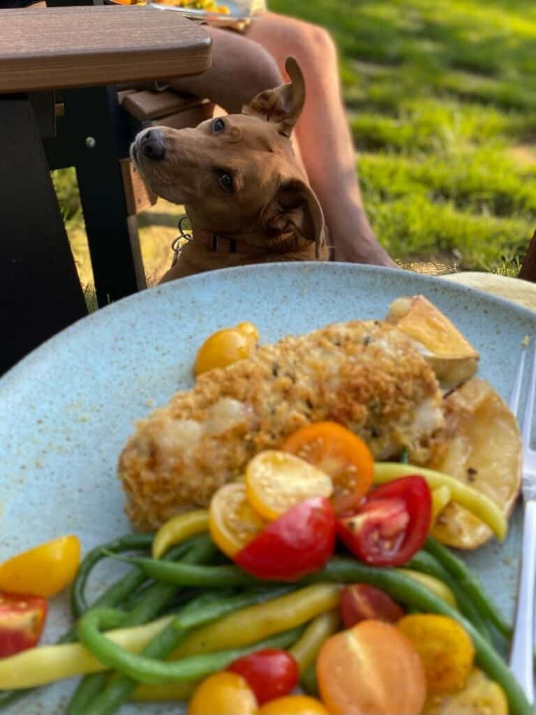 plated rockfish in foreground, dog in background looking longingly